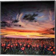 Sunset lit Poppy Field Fine-Art Print