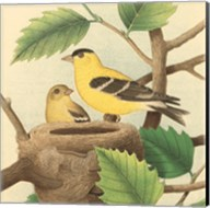 Goldfinch & Warbler A Fine-Art Print