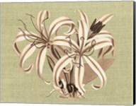 Regence Lily I Fine-Art Print