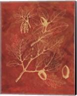 Golden Oak II Fine-Art Print