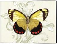 Butterfly Theme II Fine-Art Print