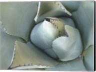 Agave Detail III Fine-Art Print