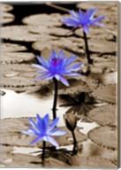 Pop of Color Lotus Flowers Fine-Art Print