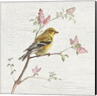 Female Goldfinch Vintage Fine-Art Print