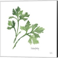 Italian Parsley Fine-Art Print