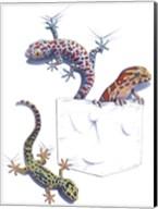 Three Lizards Fine-Art Print