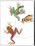 Three Frogs Fine-Art Print