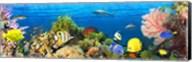 Life in the Coral Reef, Maldives Fine-Art Print