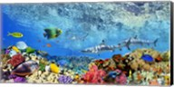 Reef Sharks and fish, Indian Sea Fine-Art Print