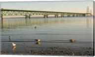 Mackinac Bridge, Mackinaw City, Michigan Fine-Art Print