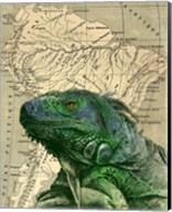 Brazilian Iguana Fine-Art Print