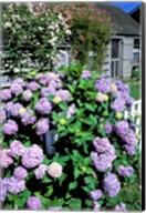 Massachusetts, Nantucket, Siasconset, Home Flowers Fine-Art Print
