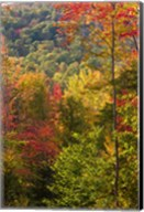 Fall in a Forest in Grafton, New Hampshire Fine-Art Print