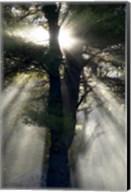 New England, New Hampshire, Sunlight Through Trees Fine-Art Print
