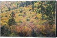 New Hampshire, White Mountains, Crawford Notch, fall foliage by Mount Washington Fine-Art Print