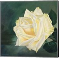 A Rose is a Rose 1 Fine-Art Print