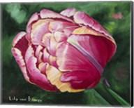 Mama Mia Tulip Fine-Art Print
