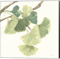 Gingko Leaves I Light Fine-Art Print