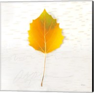 Autumn Colors III Fine-Art Print