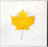 Autumn Colors II Fine-Art Print