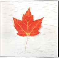 Autumn Colors I Fine-Art Print