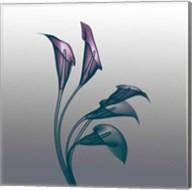 Ombre Calla Lilies X-Ray Fine-Art Print