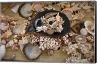 Sea Shells, Fiji Fine-Art Print