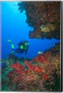 Diver, Coral-lined Arc, Beqa Island, Fiji Fine-Art Print