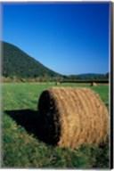 Hay Bales in Litchfield Hills, Connecticut Fine-Art Print