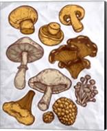 Mushroom Variation Fine-Art Print