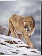 Cougar Fine-Art Print