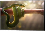 Tree Snake Fine-Art Print