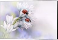 Ladybirds Fine-Art Print