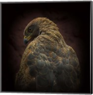 Somebody Watch Me-Savanna Hawk Fine-Art Print