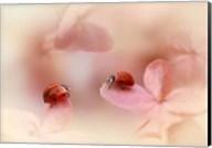 Ladybirds On Pink Hydrangea Fine-Art Print