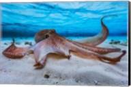 Octopus Fine-Art Print
