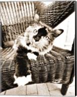 Kitty IV Fine-Art Print