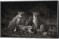 Cheetah Cubs Fine-Art Print