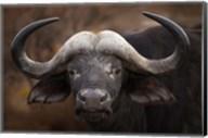A Buffalo Portrait Fine-Art Print