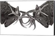 Eye To Eye - Elk Fight Fine-Art Print