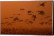 Army Cranes At Golden Sunrise Fine-Art Print