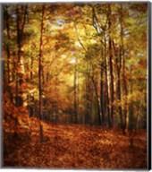 Autumn's Enchanted Forest Fine-Art Print