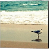 Seagull on Beach Fine-Art Print
