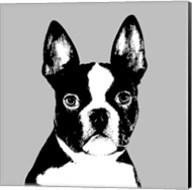 Bulls and Terriers II Fine-Art Print