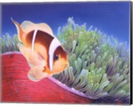 Clown Fish Fine-Art Print