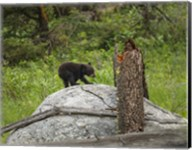 Bear Cub On Rock Fine-Art Print