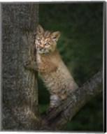 Bobcat Kitten Poses Against Tree Trunk Fine-Art Print
