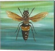 Honey Bee Fine-Art Print