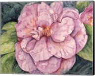 Pink Camilla Fine-Art Print