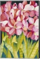 Merry Amaryllis Fine-Art Print
